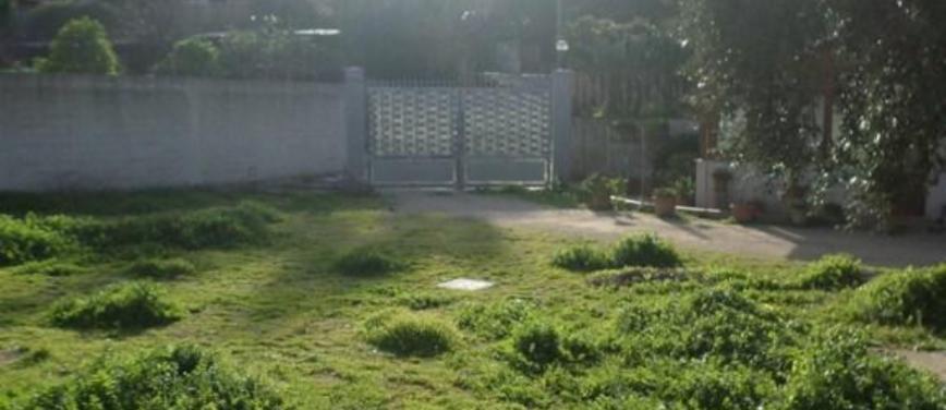 Terreno agricolo in Affitto a Palermo (Palermo) - Rif: 25531 - foto 5
