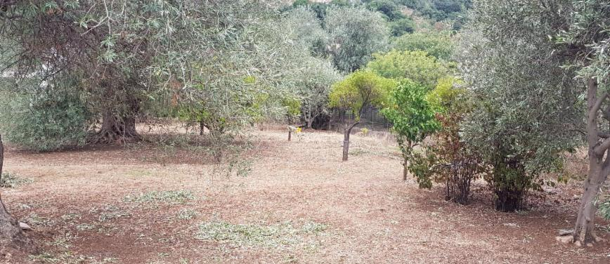 Terreno agricolo in Vendita a Carini (Palermo) - Rif: 27163 - foto 1