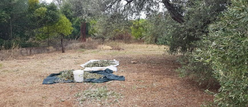 Terreno agricolo in Vendita a Carini (Palermo) - Rif: 27163 - foto 2