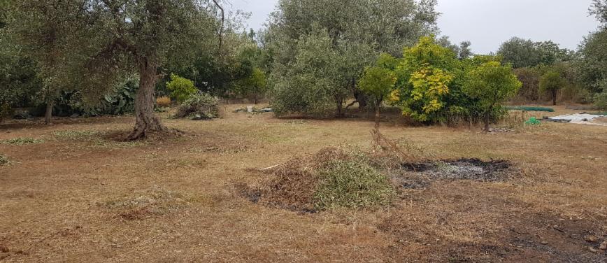 Terreno agricolo in Vendita a Carini (Palermo) - Rif: 27163 - foto 3