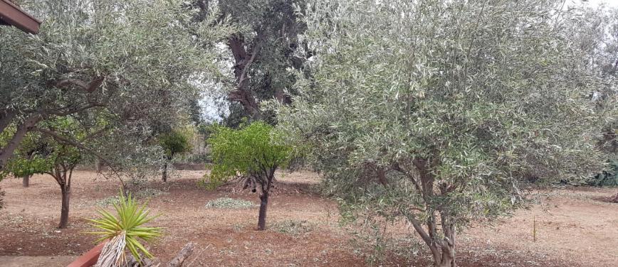 Terreno agricolo in Vendita a Carini (Palermo) - Rif: 27163 - foto 5