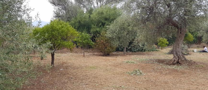 Terreno agricolo in Vendita a Carini (Palermo) - Rif: 27163 - foto 7