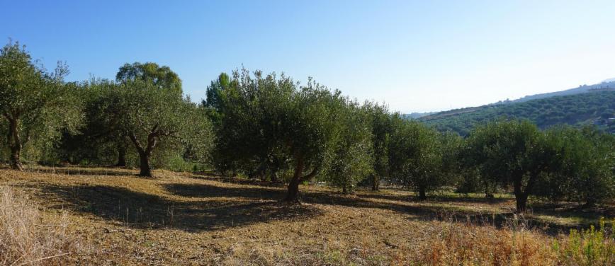 Terreno agricolo in Vendita a Bagheria (Palermo) - Rif: 27309 - foto 5