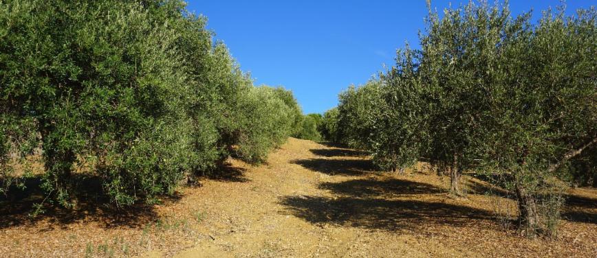 Terreno agricolo in Vendita a Bagheria (Palermo) - Rif: 27309 - foto 7