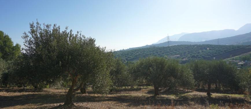 Terreno agricolo in Vendita a Bagheria (Palermo) - Rif: 27309 - foto 9