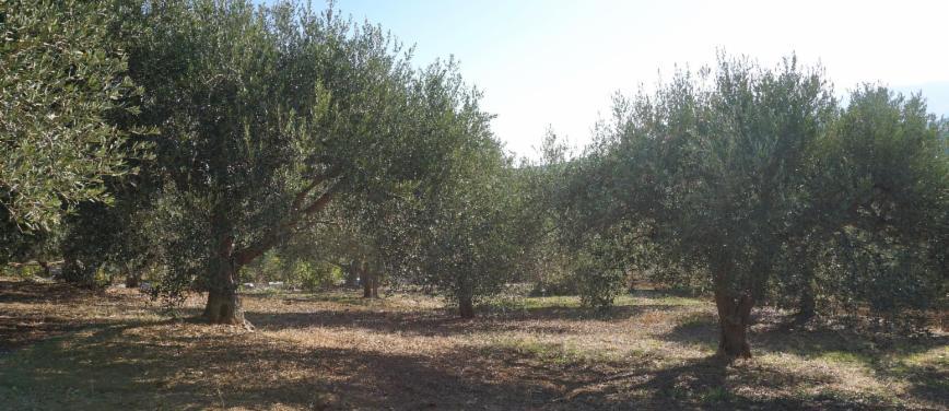 Terreno agricolo in Vendita a Bagheria (Palermo) - Rif: 27309 - foto 11