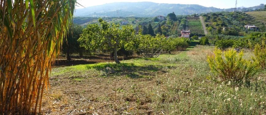 Terreno agricolo in Vendita a Bagheria (Palermo) - Rif: 27309 - foto 13