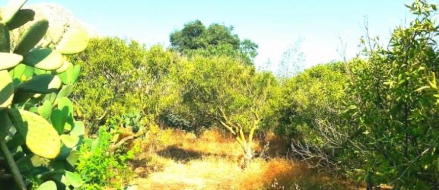 Terreno agricolo in Vendita a Palermo (Palermo) - Rif: 27310 - foto 2