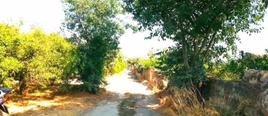 Terreno agricolo in Vendita a Palermo (Palermo) - Rif: 27310 - foto 3