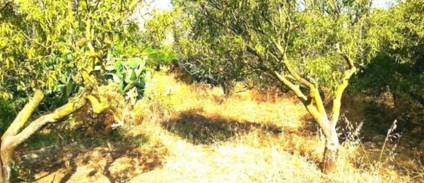 Terreno agricolo in Vendita a Palermo (Palermo) - Rif: 27310 - foto 5