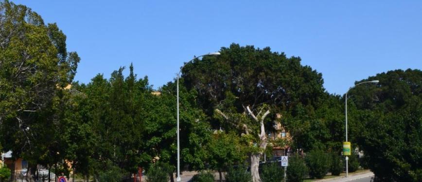 Appartamento in Vendita a Palermo (Palermo) - Rif: 27646 - foto 7