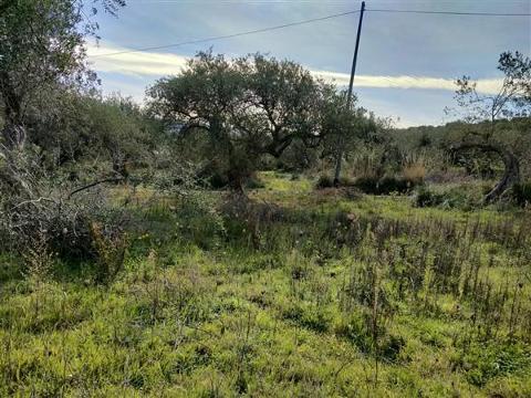 Terreno agricolo in Vendita a Trabia(PA)